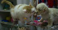 Katzen treffen das erste Mal auf das neue Familienmitglied!