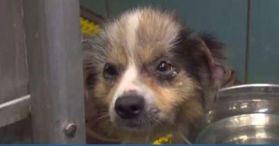Herzlos und eiskalt: Er setzt seinen kranken Hund hilflos aus