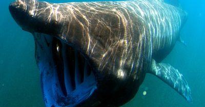 7 faszinierende Tiere aus der Tiefsee!