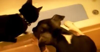 Katze vs Hund - was glaubt ihr, wer besser ist?