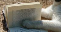 Der Bestseller einer Katze