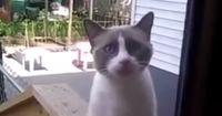 Diese Katze ist der Hit!