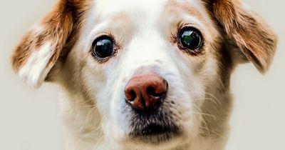 Das harte Schicksal zwei einsamer Hunde