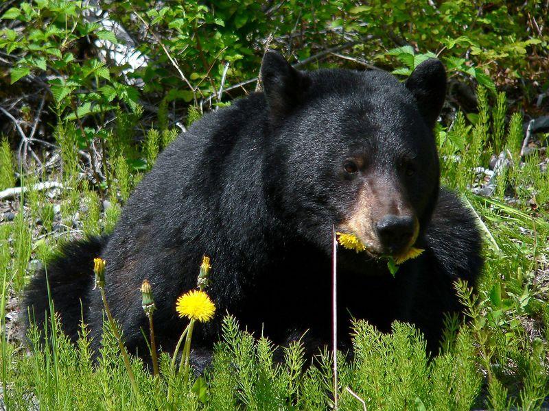 Mann rettet gefährlichen Bären vor dem Tod