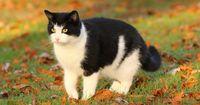 Die lauteste Katze der Welt!