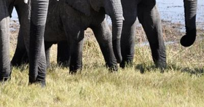 Rührender Zusammenhalt bei Elefanten