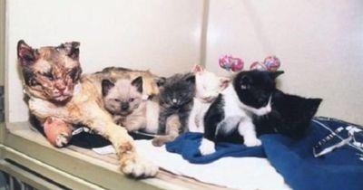 Katze läuft 5 mal durch Feuer, um ihre Babys zu retten!
