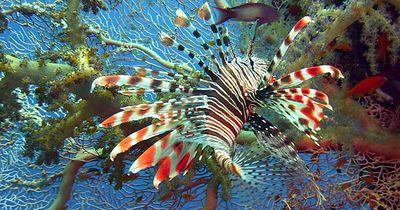 Das sind wohl wirklich die 5 seltsamsten Fische, die es in unseren Gewässern gibt