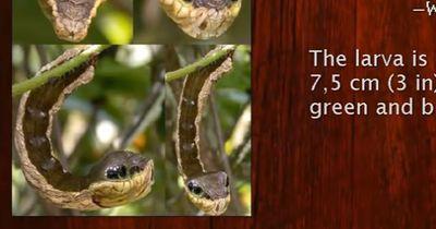 Die Top 10 der seltsamsten Tiere der Welt