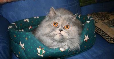 7 Anzeichen, dass deine Katze dich töten will