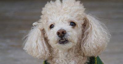 10 Hunde, die eine bessere Frisur haben als ich!