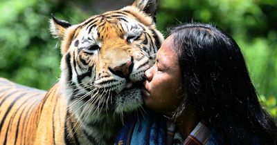 Freundschaft mit einem Tiger