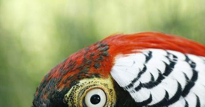 5 unfassbare Tier-Hybriden