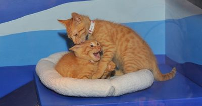 So stellt man zwei Katzen einander vor!