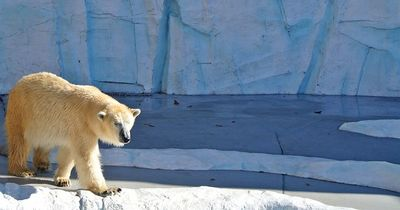 Ein Eisbär mit Herz