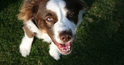 Dieser Hund wird wieder glücklich gemacht