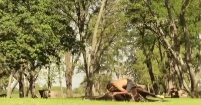 Was dieser Mann mit seinem Pferd macht, wirst du nicht glauben!