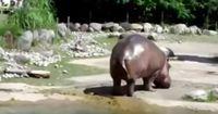 Hast du schon ein Nilpferd pupsen gehört?