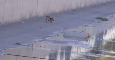Ein ausgesetzter Hund war im Flussbett gefangen!