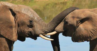 Die 5 größten Tiere der Welt!