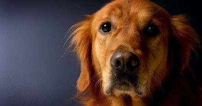 Retter des Tages: Hund rettet sein blindes Herrchen!