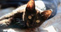 So gewöhnst du deiner Katze das Kratzen an Möbelstücken ab!