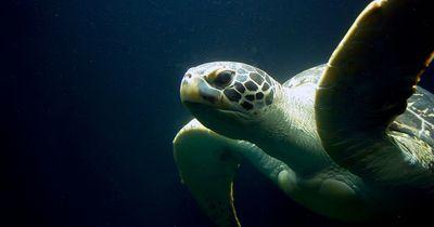 Ewiges Leben: Diese Tiere können so gut wie nicht sterben!