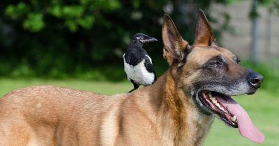 Die außergewöhnlichsten Tierfreundschaften überhaupt