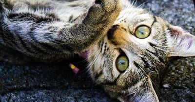 Trefft Roux, die tapferste Katze.