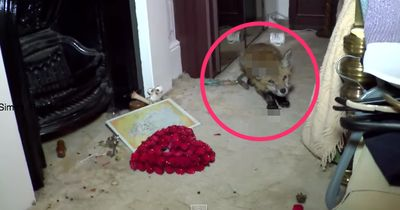 Ungebetener Gast im Schlafzimmer eines älteren Paares ...