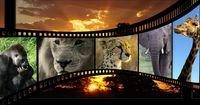Die beliebtesten Tier-Filme aller Zeiten!
