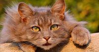 Katzen ärgern gerne