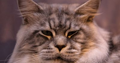 5 Zeichen dafür, dass deine Katze dich liebt