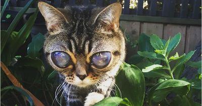 Matilda - die Katze mit den Alien-Augen!