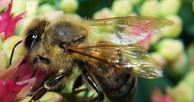 Ohne Bienen kein Honig