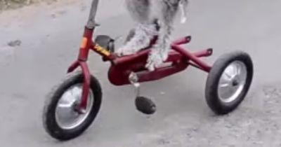 Barry fährt Dreirad