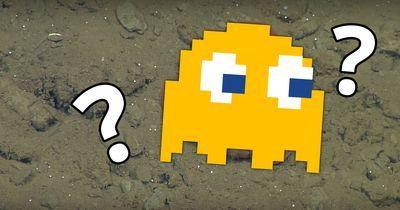 Dieser kleiner Oktopus sorgt für Aufregung im Internet!