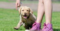 5 coole Hunde-Tricks, die dein Hund unbedingt können muss!