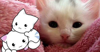 10 Kätzchen, die unbedingt geknuddelt werden müssen!