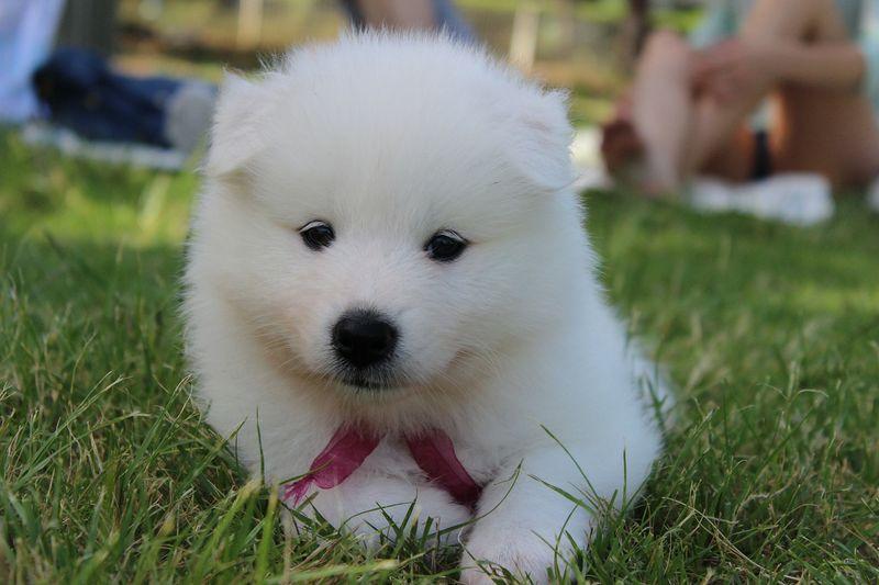 Was Ist Als Erstes Zutun Wenn Man Einen Hundewelpen Bekommt