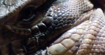 Das tödlichste Reptil der Welt