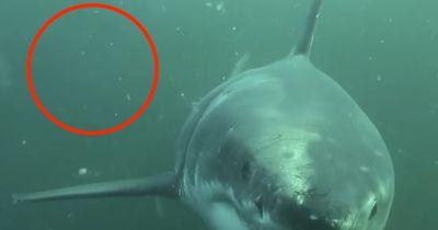 Ein Alptraum wird wahr: Auge in Auge mit einem Hai