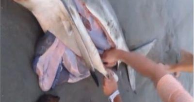 Mann schneidet Hai den Bauch auf... Was dann rauskommt, ist unglaublich!