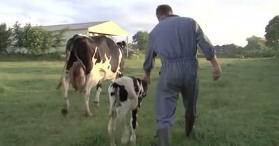 Wie die Milch ein Mutterherz bricht...