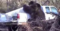 Bigfoot, bist du es? Grauenvolle Attacke mitten im Wald
