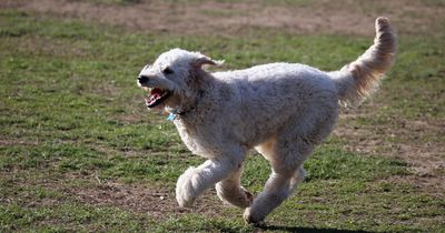 5 Tipps, mit denen dein Hund gut durch den Sommer kommt