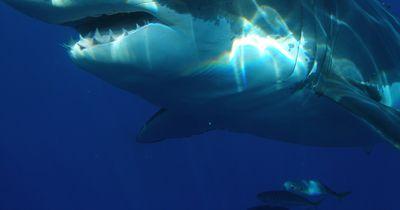 Wenn man sich ins Territorium eines Hais begibt