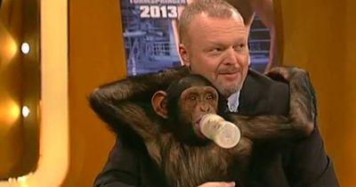 Bei Stefan Raab drehen die Affen durch