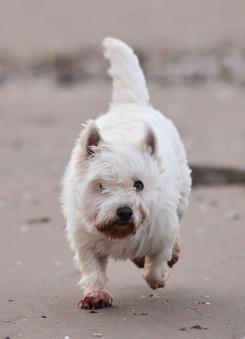 5 Anzeichen dafür, dass dein Hund sich gerade nicht wohlfühlt!
