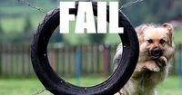 7 herrliche Dog-Fails! Da darf man auch mal lachen!